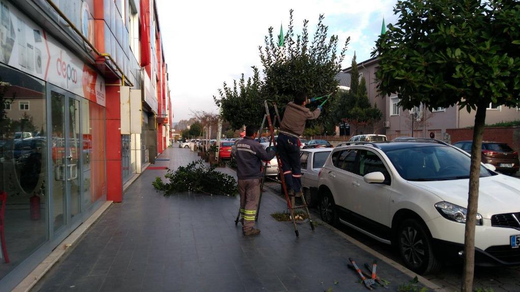 Hendek'te ağaçlar budanıyor