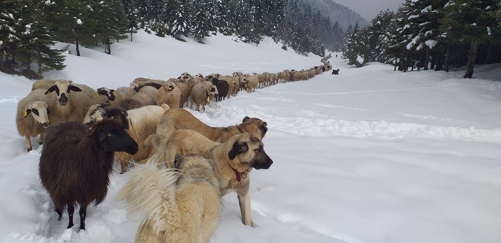Zirveden Kar Manzaraları
