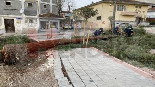 Hendek'te Etkili Rüzgar Ağaç Devirdi