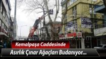 Kemalpaşa Caddesinde Asırlık Çınar Ağaçları Budanıyor