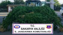 Jandarma'dan 5 İlçede Uyuşturucu Operasyonu