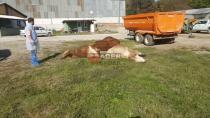 Hendek'te Esrarengiz Hayvan Ölümleri