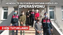 Hendek'te Büyükbaş hayvan hırsızları tutuklandı